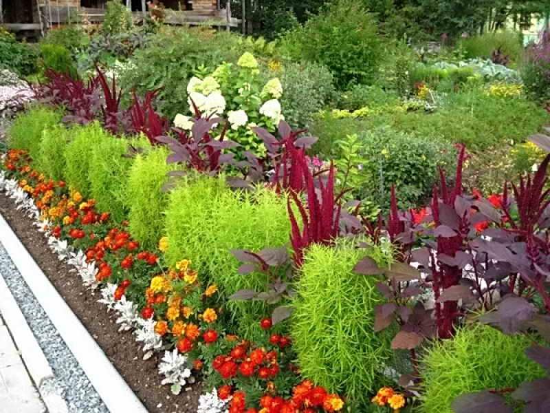 Посадить многолетники цветы