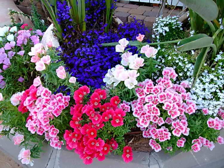 Солнцелюбивые цветы для сада многолетние цветущие все лето