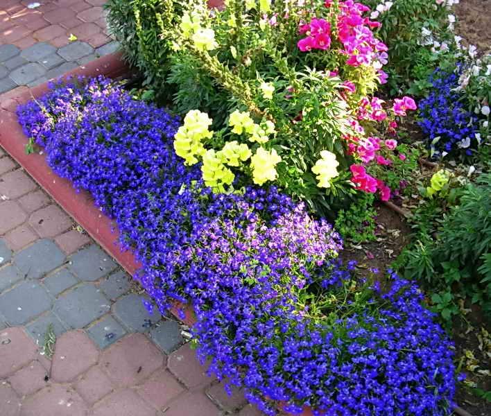 Какие цветы можно посадить на даче чтобы цвели все лето