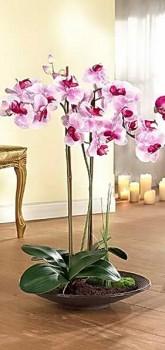 orhideya3