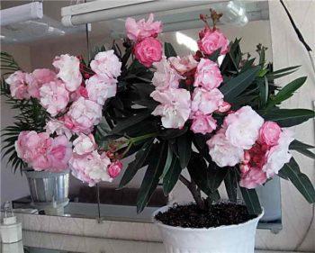 Ядовитые цветы фото и названия