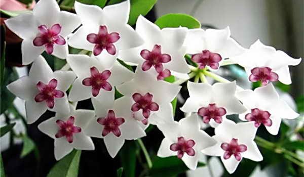 красивый здоровый цветок