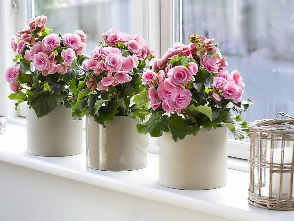 здоровые комнатные цветы без плесени