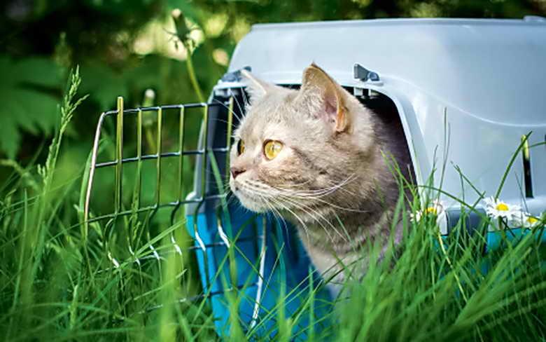 домашняя кошка на даче