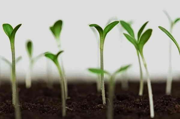 как проверить качество семян