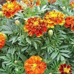 растения для кладбища